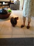 携帯からブログ:ペットと温泉